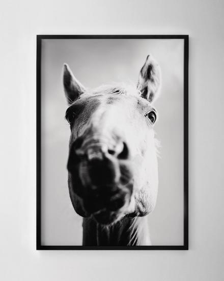 1200x1500-Horse