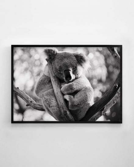 1200x1500-Koala