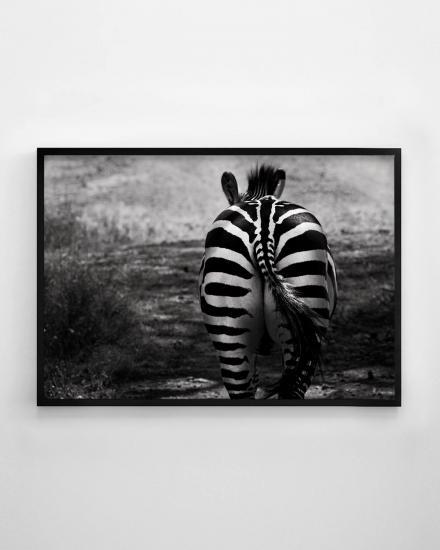 1200x1500-ZebraBackside