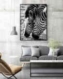 1200x1500-Zebras-3